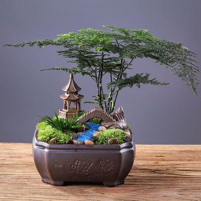 文竹小盆栽发财树包活绿植花卉防辐射茶桌摆件室内桌面榕树吸甲醛
