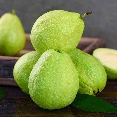 新鲜白心番石榴农家特产现摘应季热带水果阿越番石榴(坏果包赔)