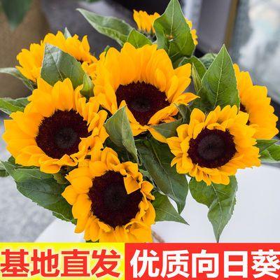 云南基地直发向日葵鲜花批发生日花束家用水养插花太阳花同城速递