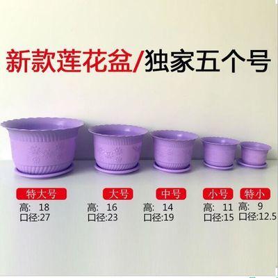 加厚花盆【送托盘+花种+生根粉】塑料莲花盆