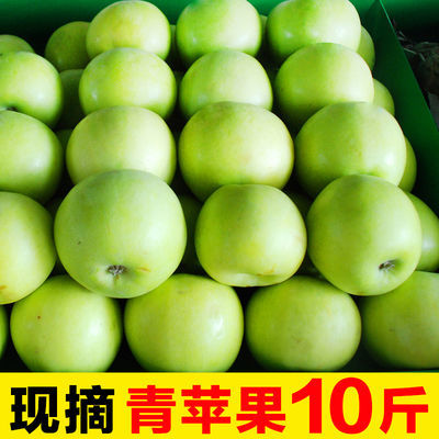 现摘青苹果10斤新鲜应季水果陕西苹果孕妇酸甜脆小萍果批发多规格【6月9日发完】