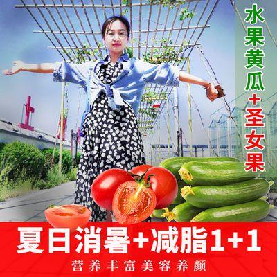 新鲜圣女果樱桃小番茄水果小黄瓜组合装生吃绿色美容瘦身水果蔬菜