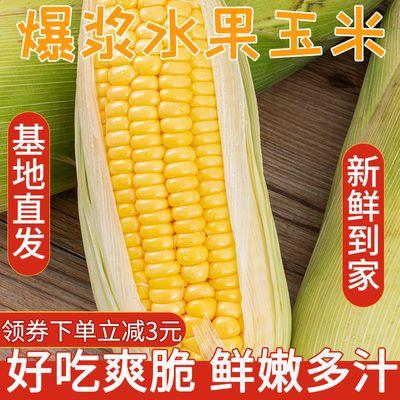 云南玉米新鲜水果玉米甜脆玉米棒颗粒饱满鲜嫩多汁非转基因蔬菜新