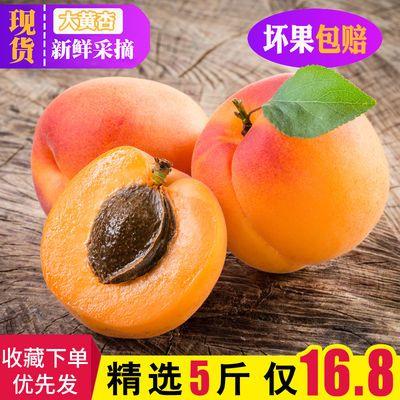 杏子水果 新鲜大黄杏金太阳杏酸甜孕妇当季现摘水果贵妃杏3/5斤装