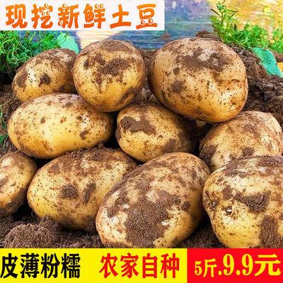 现挖现发新鲜白皮大土豆云南自产马铃薯批发5-10斤黄心小洋芋粉糯