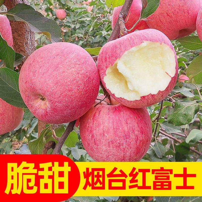 【只发精品】烟台红富士苹果当季山东新鲜水果整箱批发3斤5斤10斤