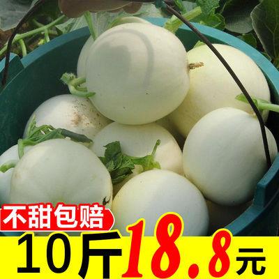陕西阎良甜瓜新鲜10斤当季水果白皮蜜瓜密瓜香瓜批发2/5/10斤