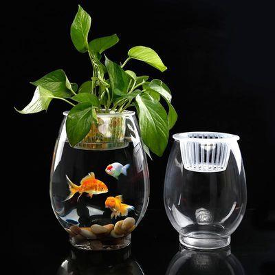 玻璃水培植物花瓶 铜钱草绿萝红掌 透明恐龙蛋富贵竹水养鱼缸器皿