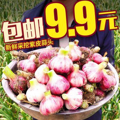 现发】农家新鲜现挖紫皮大蒜头蔬菜红皮鲜姜蒜苍山干蒜子糖醋独蒜