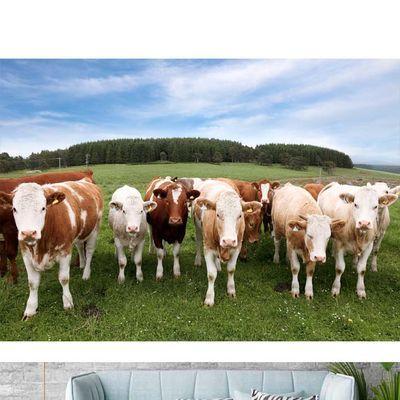 蒙古大草原牛羊风景画壁纸蓝天白云牧场羊群牛群海报画贴墙壁画