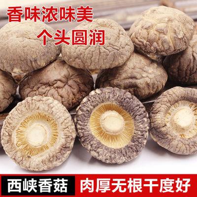 西峡香菇干货干蘑菇批发肉厚无根冬菇野生椴木花菇干货500g/250g