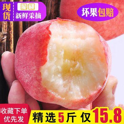 桃子水果 新鲜水蜜桃脆甜毛桃脆桃现摘1/5斤装孕妇非黄桃油桃血桃【6月10日发完】