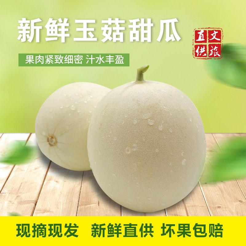 山东头茬翡翠玉菇甜瓜香瓜现摘现发应季水果孕妇儿童时令