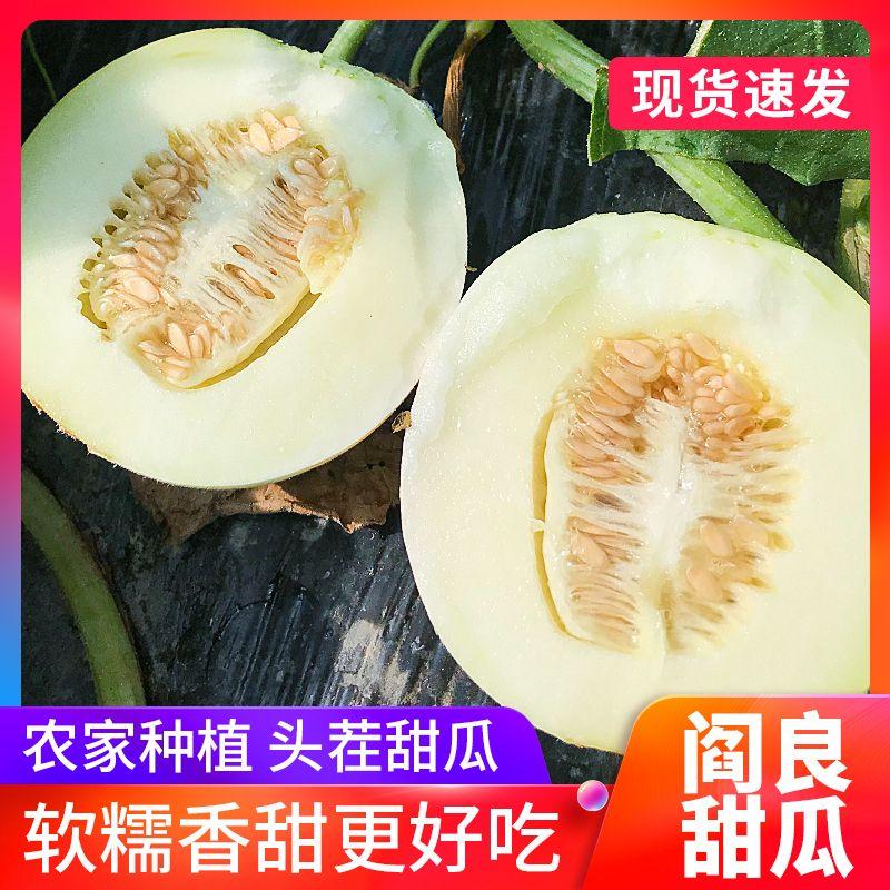 陕西阎良甜瓜小白瓜头茬现摘白皮蜜瓜当季新鲜水果香瓜整箱批发