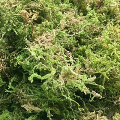 干水苔兰花蝴蝶兰石斛多肉栽培营养土干苔藓苗木嫁接乌龟冬眠水草
