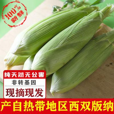 【超大8根】云南水果玉米现摘甜脆甜玉米棒甜脆爆浆嫩非糯玉米