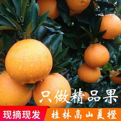 脐橙发现夏橙橙桂林当季整箱批血新鲜水果水果应季水果新鲜橙子摘