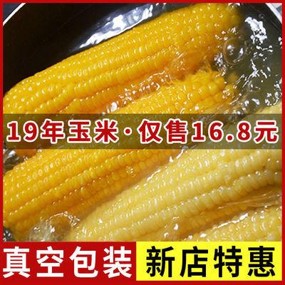 19年新鲜黄糯玉米粗粮山西特产真空袋装早餐即食甜粘黏糯白玉米棒