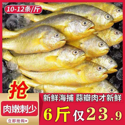 小黄花鱼新鲜黄鱼野生海鱼冰冻海鲜水产黄鱼鲜活小黄鱼30%包冰