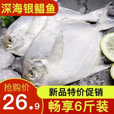 野生小银鲳鱼大海鱼新鲜鲳鱼海鲜昌鱼冷冻白鲳鱼平鱼鳊鱼30%包冰