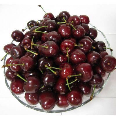 进口车水果厘子进口新包邮早顺丰樱桃智利大樱桃水果现发现摘樱桃