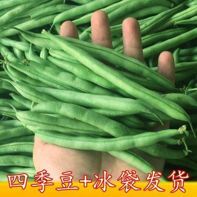 四季豆四季福建四季豆蔬菜室外现摘四季四季摘豆角发现种植农家水
