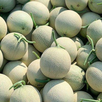 【甜】现摘玫珑瓜网纹瓜甜瓜新鲜水果玲珑瓜时令水果4.5-10