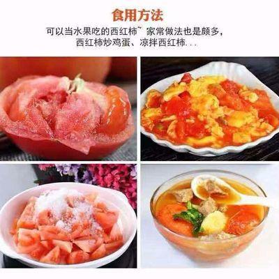 35新鲜现水果自然摘斤儿童发现西红柿孕妇番茄沙瓤熟斤包邮