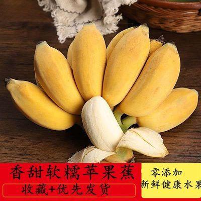 【今日大特价】苹果蕉小米蕉新鲜水果香蕉水果批发孕妇香蕉批发