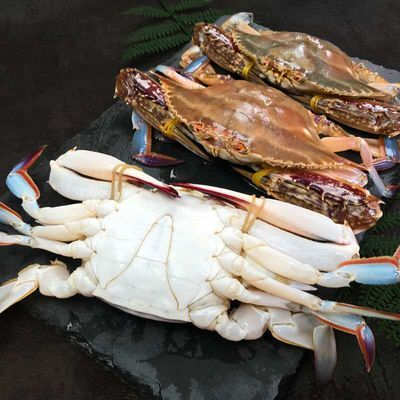 鲜活梭子蟹冷冻母蟹大公蟹野生螃蟹纯海洋飞蟹花蟹海鲜水产严选