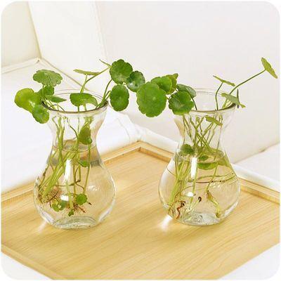 T风信子玻璃瓶透明水培容器水仙花瓶玻璃水培插花植物花瓶批发