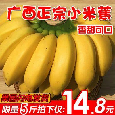 【今日低价】广西小米蕉3斤5斤9斤新鲜香蕉当季水果批发