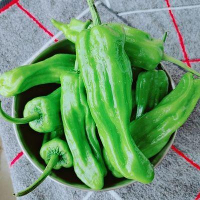 【精选薄皮青椒5斤】新鲜微辣薄皮青椒现摘尖椒微辣青椒5斤3斤