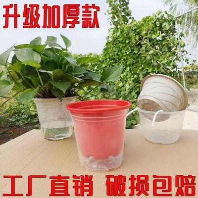。加厚绿萝花盆透明花盆透明花盆绿萝壳自动吸水免浇水存水盆接水