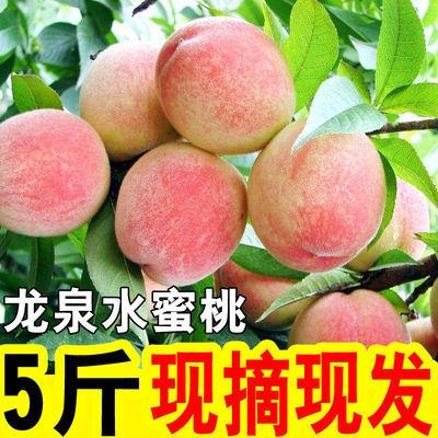 成都龙泉水蜜桃脆桃 新鲜现摘 脆甜多汁应季孕妇水果 特价包邮