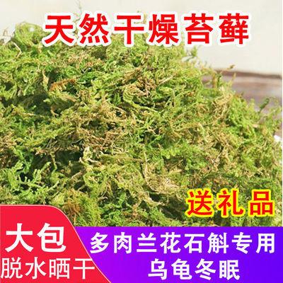 育苗嫁接乌龟冬眠垫材干苔藓青苔蝴蝶兰花铁皮石斛种植营养土水苔