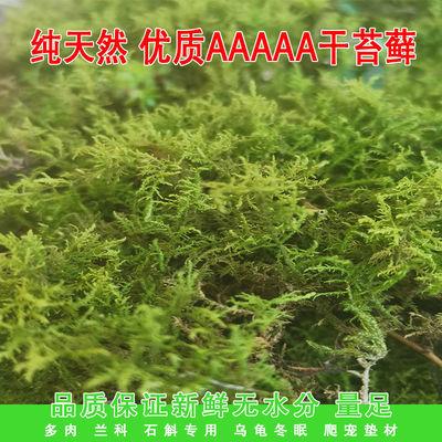 质水苔营养土多肉石斛种植嫁接乌龟冬眠垫材干苔藓蝴蝶兰花栽培基