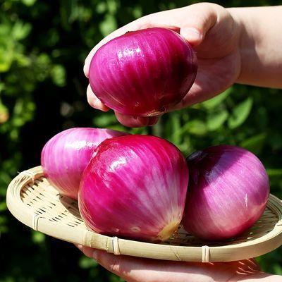 2020年新鲜洋葱红皮紫皮葱头农家自种当季元葱大圆葱蔬菜10斤5斤