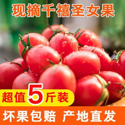 山东千禧小番茄圣女果新鲜水果包邮小番茄西红柿子拼盘孕妇水果