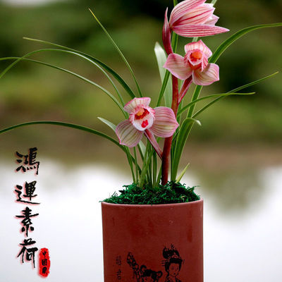 https://t00img.yangkeduo.com/goods/images/2020-05-29/523dd3e62034ac3f370fa94a6076ef25.jpeg