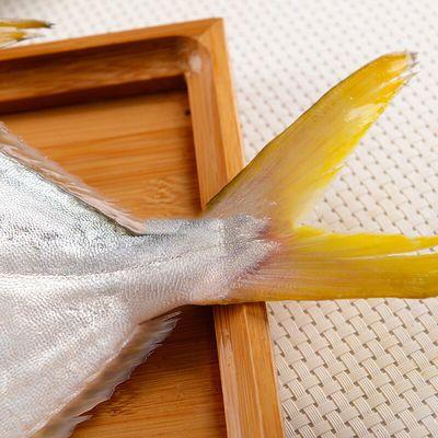 【野生海捕鲳鱼】鲳鱼新鲜鲜活野生金鲳鱼海鱼大平鱼扁鱼新鲜海鲜