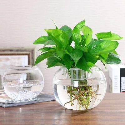 2个送彩石透明玻璃花瓶水培绿萝花盆客厅室内鱼缸圆形水养器皿