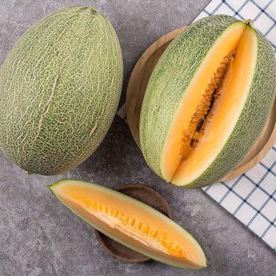 【坏果包赔】海南哈密瓜(单果1250g起)果园直发新鲜当季水果
