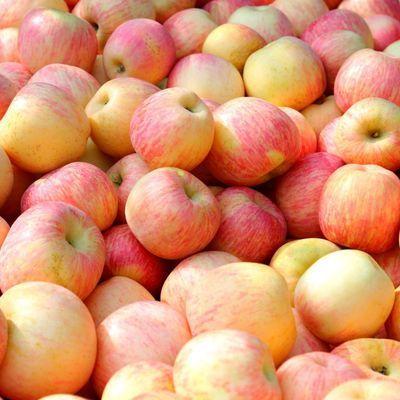 陕西延安洛川纸袋红富士苹果脆甜红苹果大苹果5/8斤新鲜水果糖心