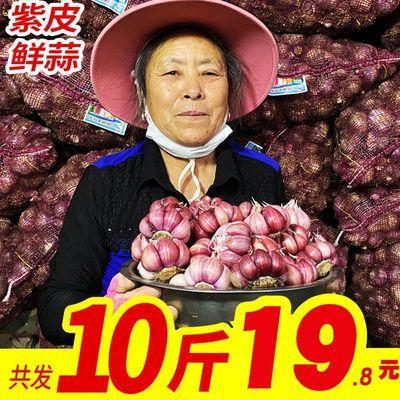 2020河南新鲜紫皮大蒜5/10斤红皮大蒜头独头蒜湿干蒜蔬菜整箱包邮