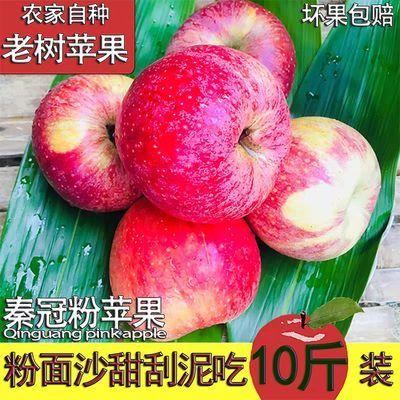 新鲜苹果水果秦冠甜粉面正宗陕西10斤批发一整箱冰糖心当季应季