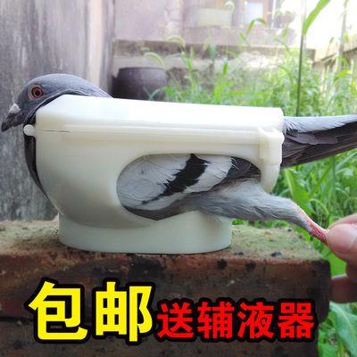 新款鸽子固定器一个人轻松打针喂药看鸽眼送信鸽辅液器鸽具鸟用品