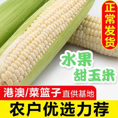 精选洞庭水果玉米新鲜爆浆牛奶白玉米即食水果软糯香甜4/6根包邮