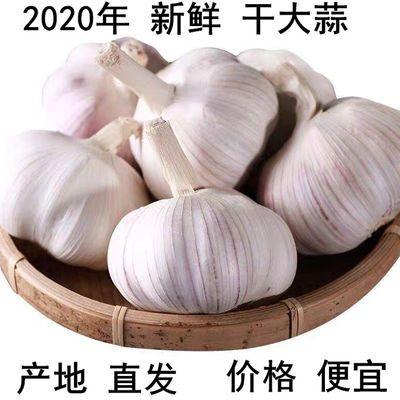 河南农家干大蒜自种2020年新蒜干蒜大蒜头5斤/10斤装紫白皮新大蒜