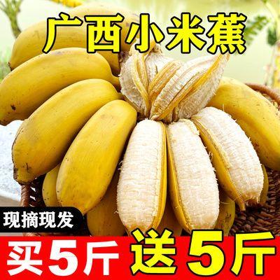 【现摘泡沫箱】广西小米蕉9斤应季新鲜水果3/5斤小香蕉芭蕉皇帝蕉